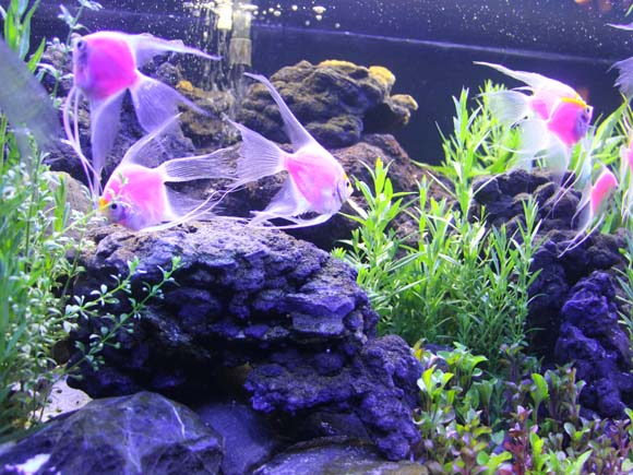 Beautiful fishes in a fish tank