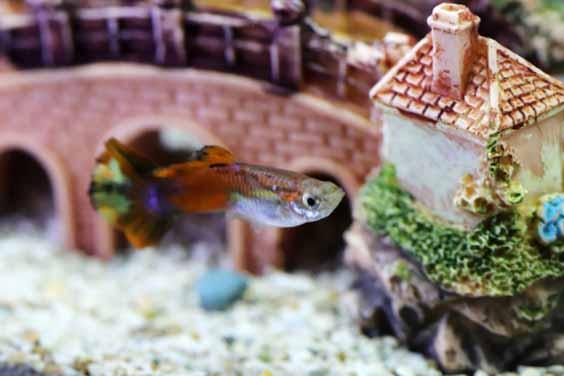 A Fish Inside a Tank