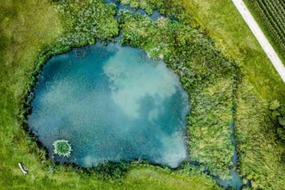 A natural pond surrounded by abundant vegetation