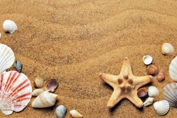 Beach Sand and Shells