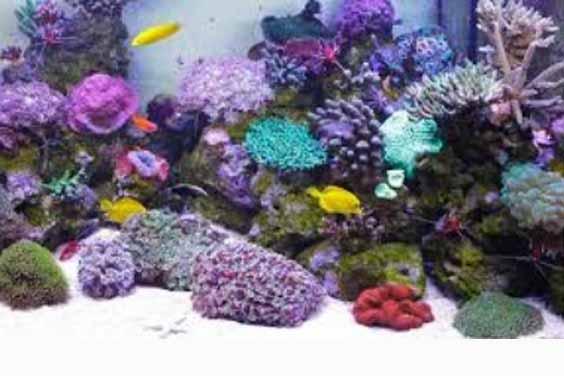 For Marine Aquarium
