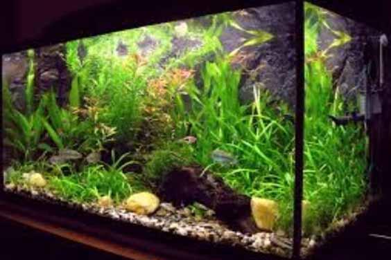 For freshwater aquarium