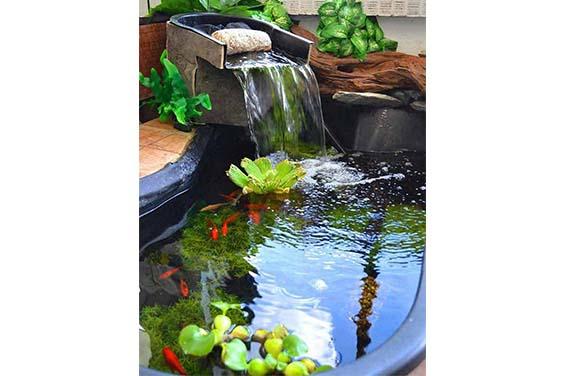 A Plastic Indoor Pond