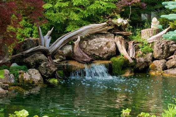 A Wood Themed Pond