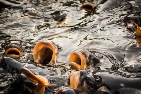 Close up image of fish feeding