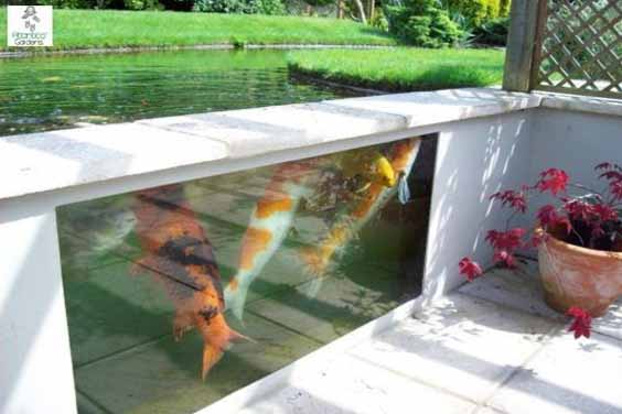 Glass Koi Pond