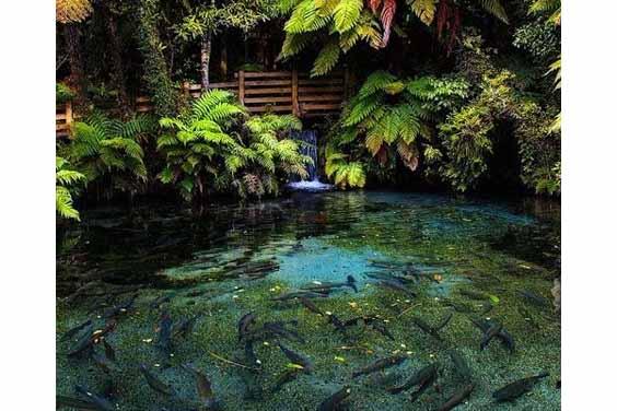Fish pond with jungle design