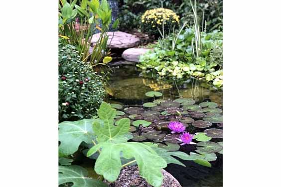 Plant Ponds