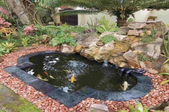 Beautiful fish pond stone design