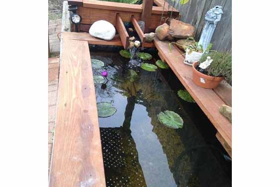 Urban pond design
