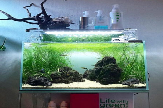 Fish Tank Cleaning Essentials
