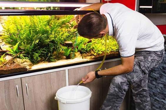 Substrate Vacuuming a Fish Tank